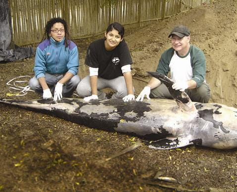 Dr. Jim Lehmann and two others kneel next to the corpse of a pilot whale that died while being freed from a fishing net.